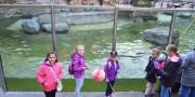 Zoo-Lešná-2019-2